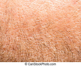 small hairs on the skin. macro