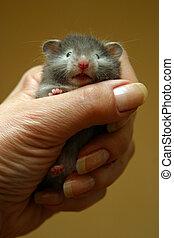 Small hamster - 2