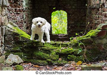 Small happy dog stone building