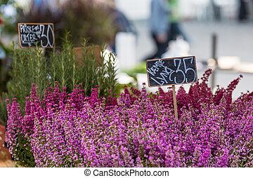 Small Heather plants on sale in Copenhagen, Denmark.