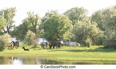 Small herd of horses and foals grazing