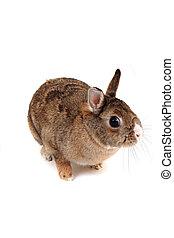 small home bunny