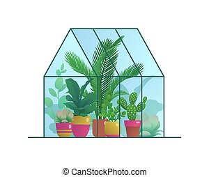 Small home greenhouse with various plants. Glass orangery, ...