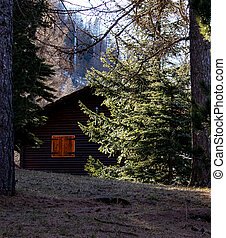 small house in the forest