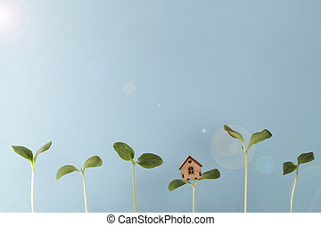 small house stand on sprout with growing young plants and glare of sun on blue background