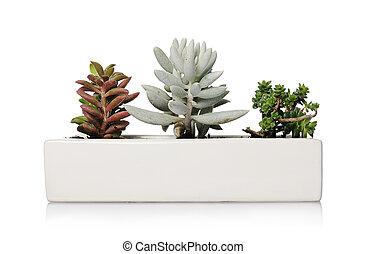 Small houseplants