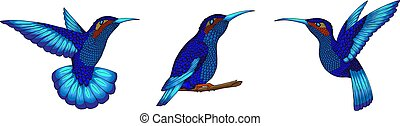 Pretty small hummingbird. Jacobin bird set. Exotic tropical colibri animal element, icon or label variants. Sapphire and blue feathers. Use for wedding, party. Engraved hand drawn as old sketch.
