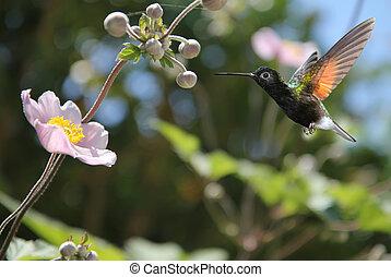 Small hummingbird near flowers frozen in action