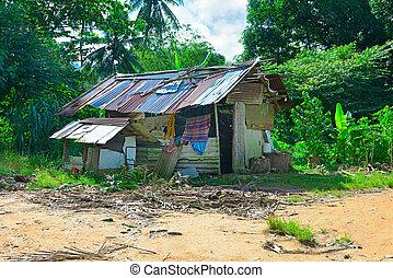 small hut in the jungle