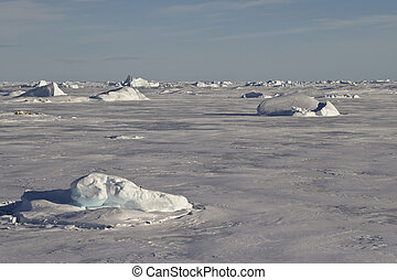 small icebergs frozen in the ice of the Southern Ocean