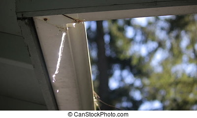 small icicle hangs in sun from gutter 1 - dripping icicles,...