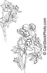 Small iris flowers