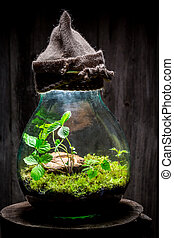 Small jar with live forest with self ecosystem