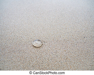 Small jelly fish on the sand beach