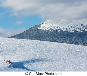 Small juniper plant on winter snow surface and mountain behind