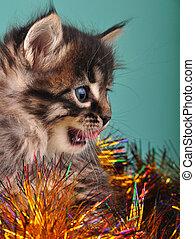 small kitten among Christmas stuff - Small kitten among...