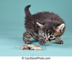 small kitten frightened and playing with fish - Small kitten...