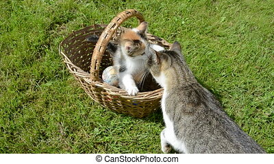small kitten in old basket and cat