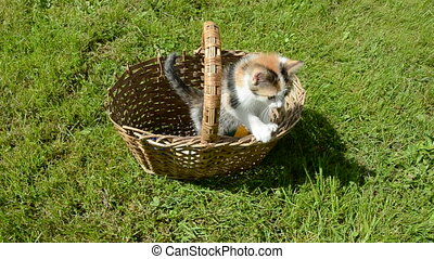 small kitten in old basket on summer grass