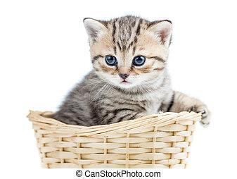 small kitten in wicker basket