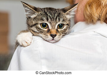 Small kitten into the hands of doctor