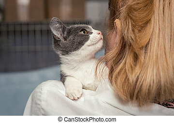 Small kitten into the hands of the physician