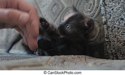 small kitten is hand-woven - cute young kittens at home.