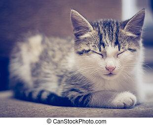 Small kitten lying on sofa.
