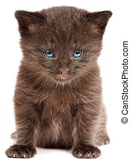 Small kitten on a white background