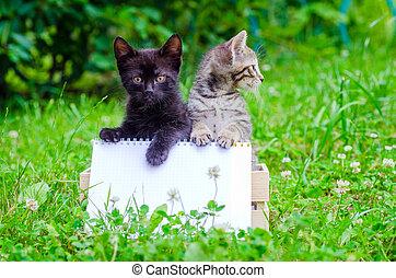 kitten on wood box