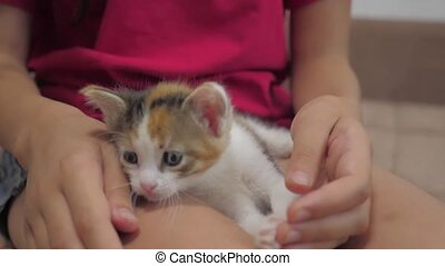 small kitten sits on the lap of a little girl slow motion...