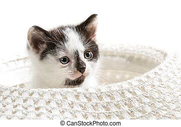 Small kitten sitting in a hat