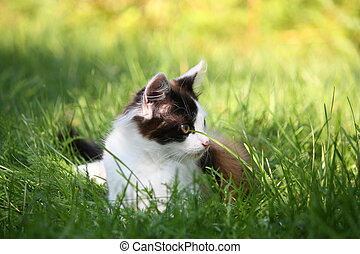Small kitten sitting in the grass