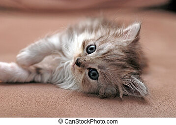 small kitten - a small cute kitten lie on sofa and looking...
