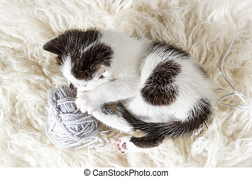 Small kitten with hank