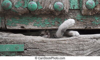Small kitty leg through old wooden door hole - Front view of...