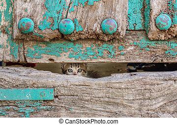 Small kitty through old wooden door hole