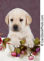 Small labrador puppy with flowers in blanket on pink pattern...