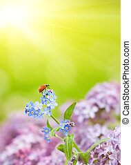 Small ladybug sitting on a field flowers