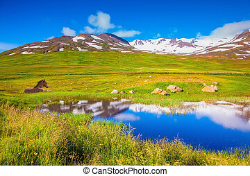 Small lake and beautiful Icelandic horse