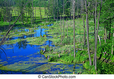 small lake in forest in Russia