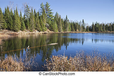 Small lake in northern Minnesota with beautiful blue water and pine trees on the shore