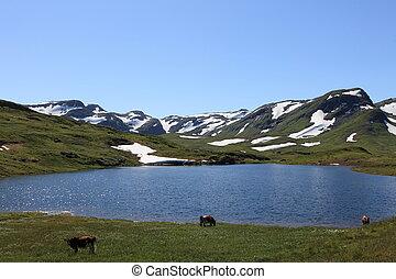 Small lake in Norwegian Highlands