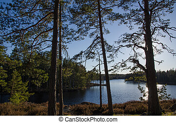 Small lake in the woods