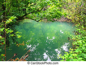 small lake in tropical thicket - small lake in the tropical...