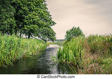 Small lake stream with rushes