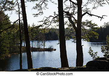 Small lake view in the woods