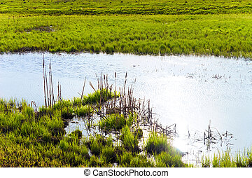 Small lake with green grass on a bank
