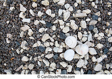 Small light shells lie on the stones.
