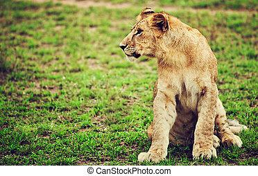 Small lion cub portrait. Tanzania, Africa